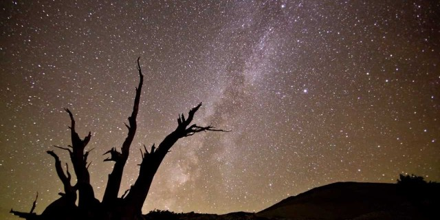 Milky Way Time-Lapse – Ancient Bristlecone Pine Forest